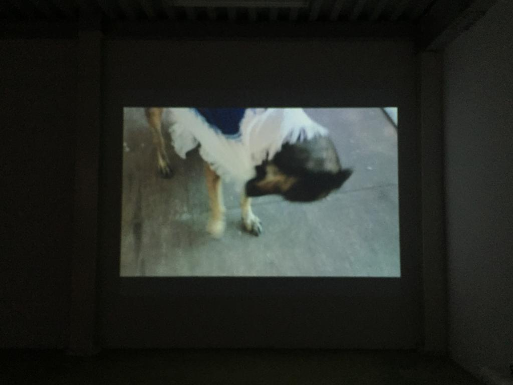 """SUPREME PRESENCE"" WORLD PREMIERE @ THE CICA EXPERIMENTAL FILM AND VIDEO EXHIBIT"